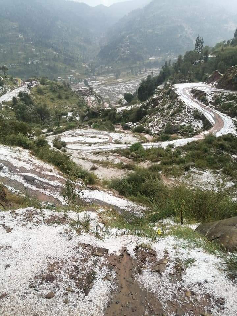 Crops damaged due to hailstorm.