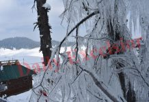 Icicles on tree branches at famous Ski resort of Gulmarg after snowfall. -Excelsior/Aabid Nabi