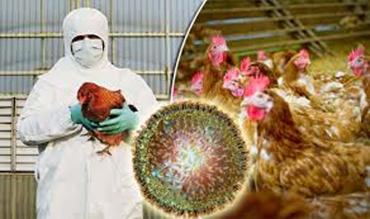 Bird flu confirmed in 4 distts of J&K
