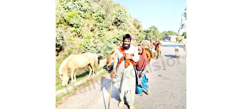 Nomads shift to hilly areas as temperature rises in Reasi. —Excelsior/Romesh Mengi