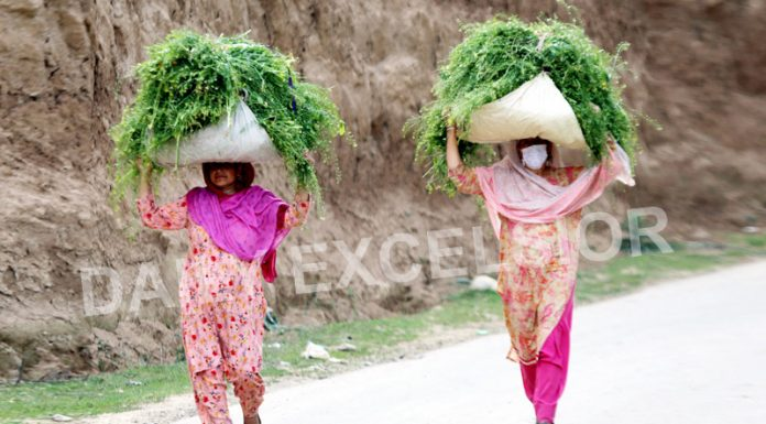 Women returning home from fields with fodder on their heads at village Payar in Pulwama district. -Excelsior/Younis Khaliq
