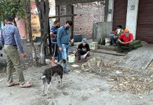 JMC workers feeding stray dogs.