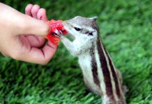 A squirrel gets feed... —Excelsior/Rakesh