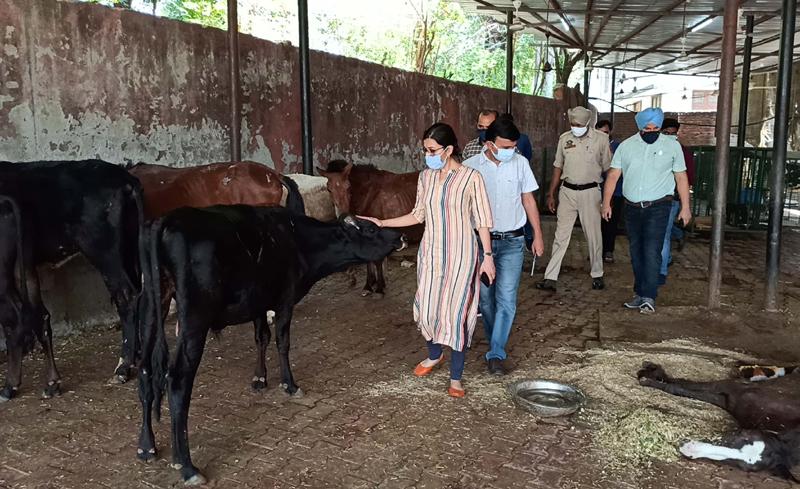 JMC Commissioner Avny Lavasa taking stock of Municipal Animal Care Centre, Roop Nagar, Jammu.