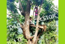 Two children make their shelter on a tree to avoid hot weather in hilly village Bulandpur of Marmat area in Doda district. — Excelsior/Rafi Choudhary