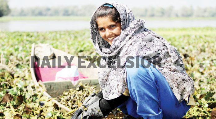 Water Chestnut extraction underway in Kashmir's Wular lake.