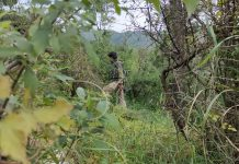 Troops during search operation in dense Bhatta Durrian forests of Mendhar on Monday. -Excelsior/Rahi Kapoor
